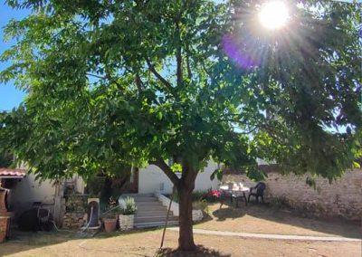 arboriste élagueur : éclaircir un arbre pour laisser passer la lumière