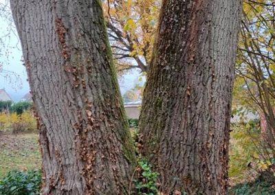 abattage arbre mort