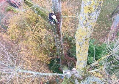 Du haut de l'arbre à abattre