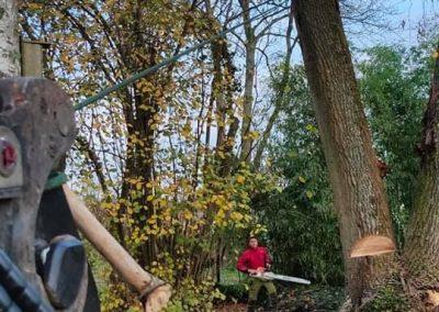 Le travail de l'arboriste consiste parfois à abattre un arbre
