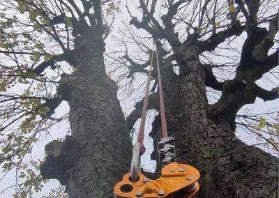 intervention d'un arboriste grimpeur pour une taille raisonnée